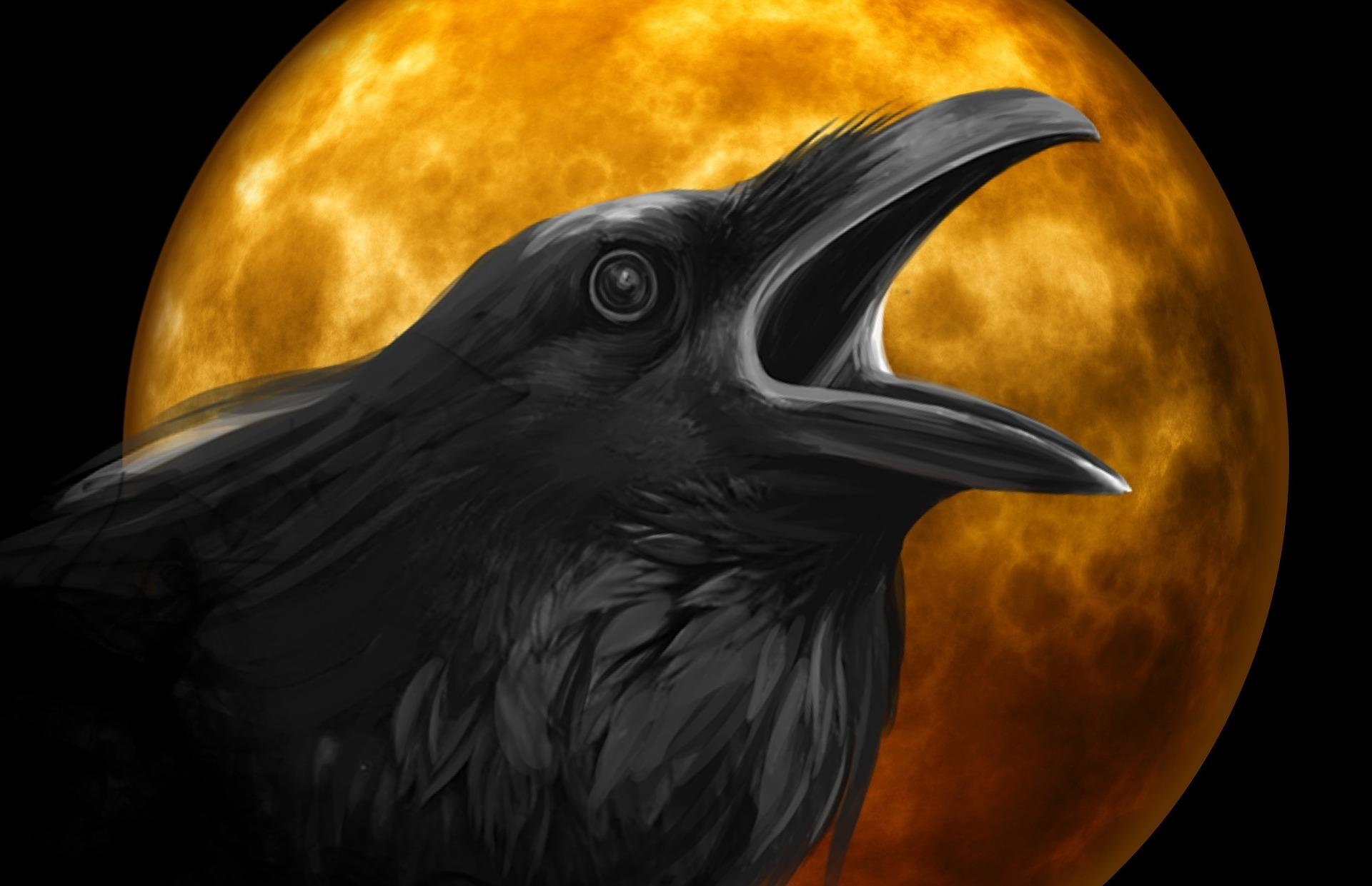 Raven scare crow